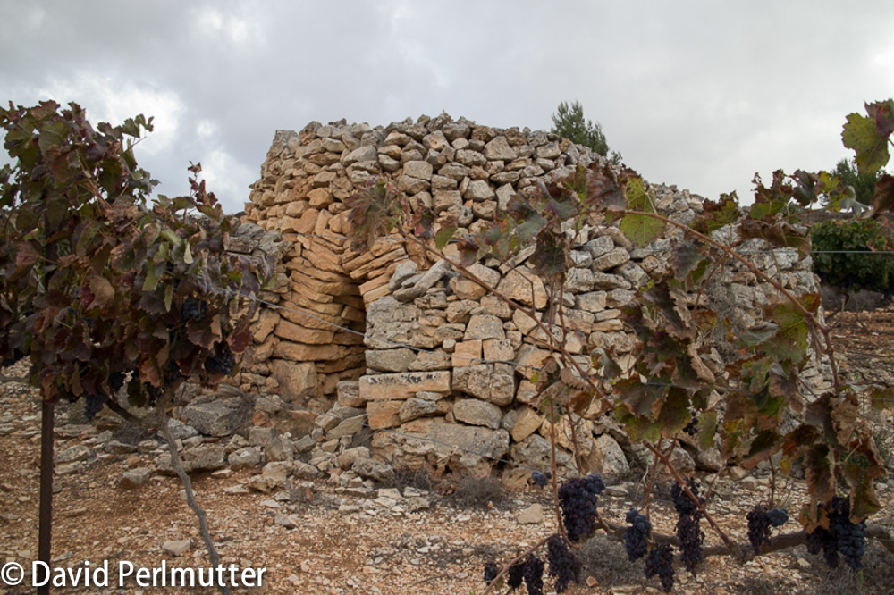 Beit El Vineyards